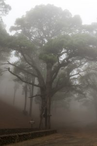 Im Nebel am Mercader